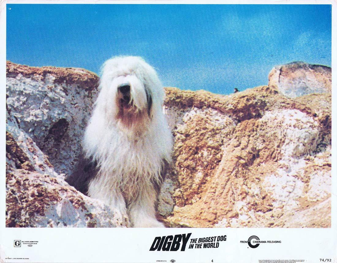 DIGBY THE BIGGEST DOG IN THE WORLD Original Lobby Card Old English Sheepdog