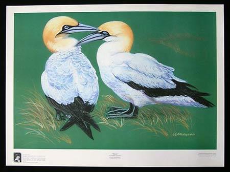 "JAN JORGENSEN ""Mates"" Australian Gannets Australian Art RARE Print"