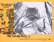 THE SAVAGE BEES Rare Australian Lobby Card 3 Ben Johnson Michael Parks