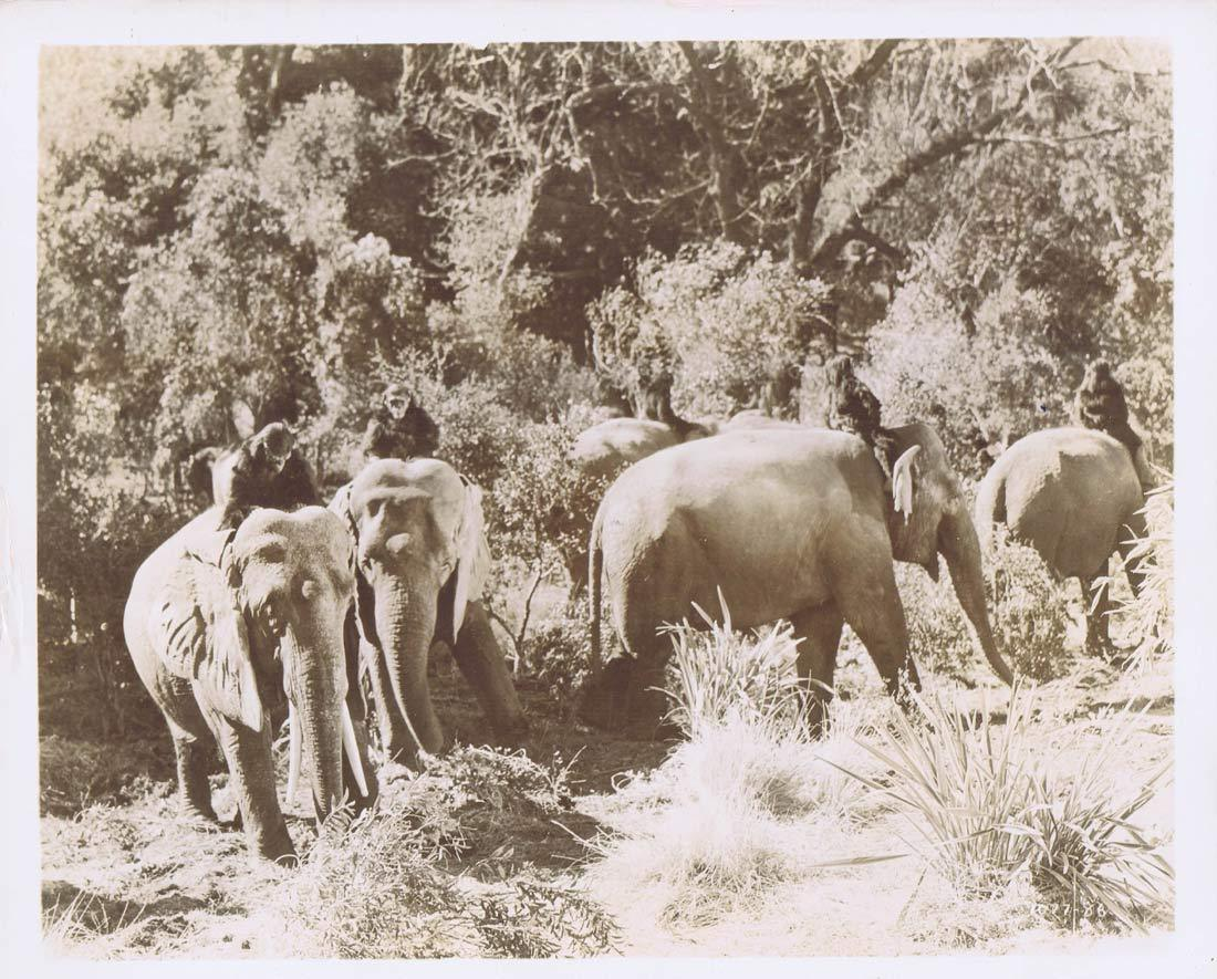 TARZAN FINDS A SON Vintage Movie Still 10 Chimps and Elephants