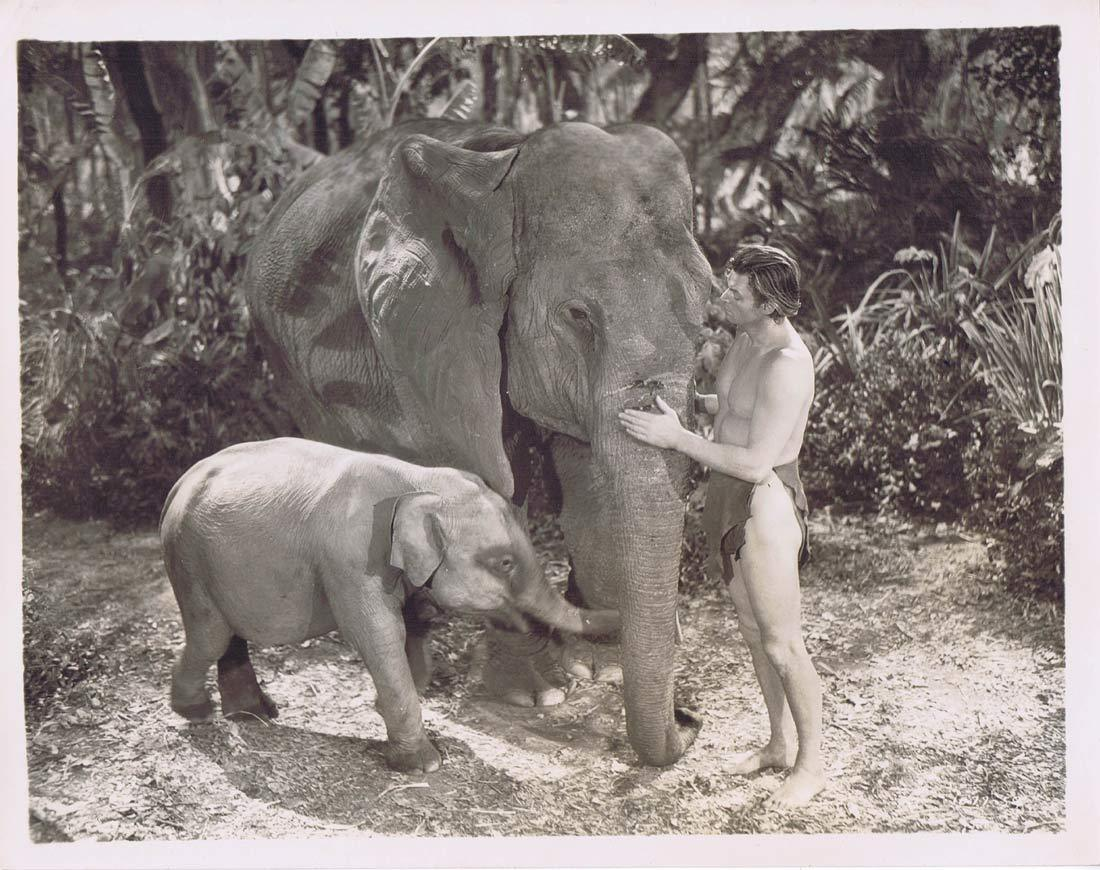 TARZAN FINDS A SON Vintage Movie Still 17 Johnny Weissmuller Elephants