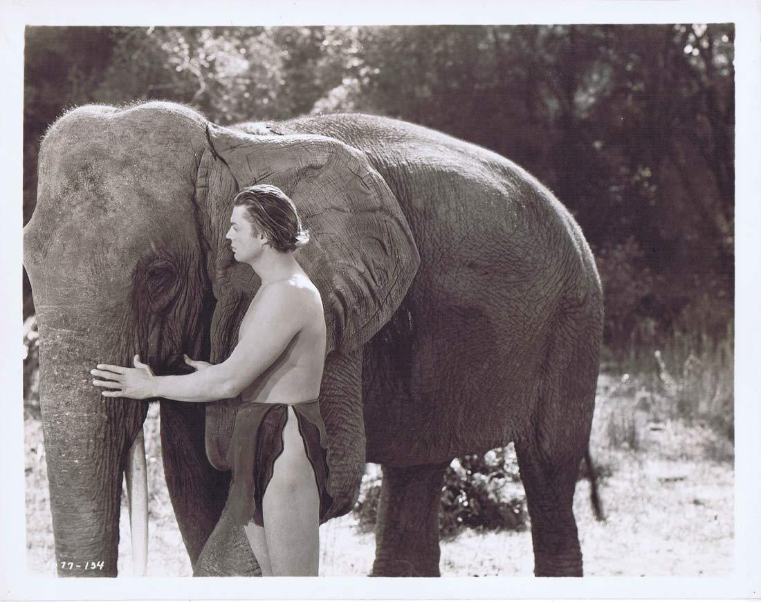TARZAN FINDS A SON Vintage Movie Still 31 Johnny Weissmuller holding Elephant